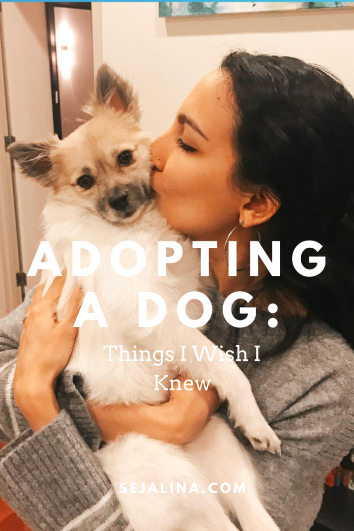 Adopting a Dog: Things I Wish I Knew